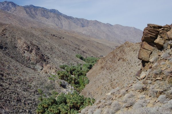 Palm tree canyon, Palm Springs, California