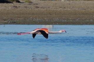 Flamingo im LandeanflugFlamingo im LandeanflugFlamingo im Landeanflug</div><!-- .entry-content -->   <div class=
