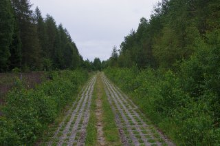 Ehemaliger Kolonnenweg an der Innenseite der Grenze