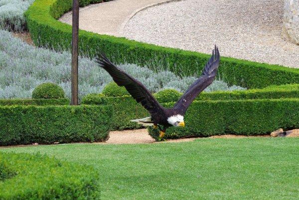 Auch der fliegende Fischadler macht was her