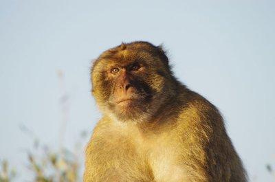 der Gibraltarfelsen ist ja für seine Affen bekannt